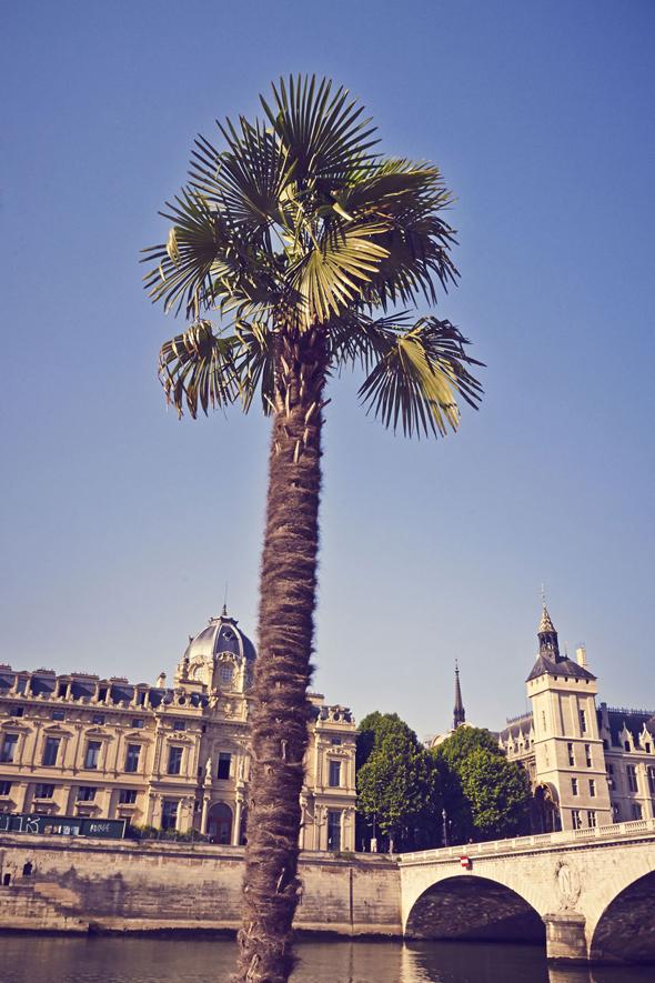 paris plages palmier