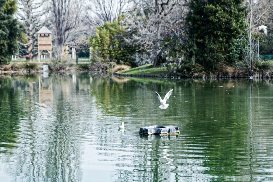 lac-mouettes-canards