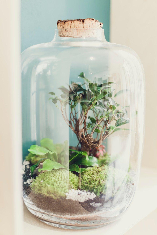 ecosysteme plante autonome
