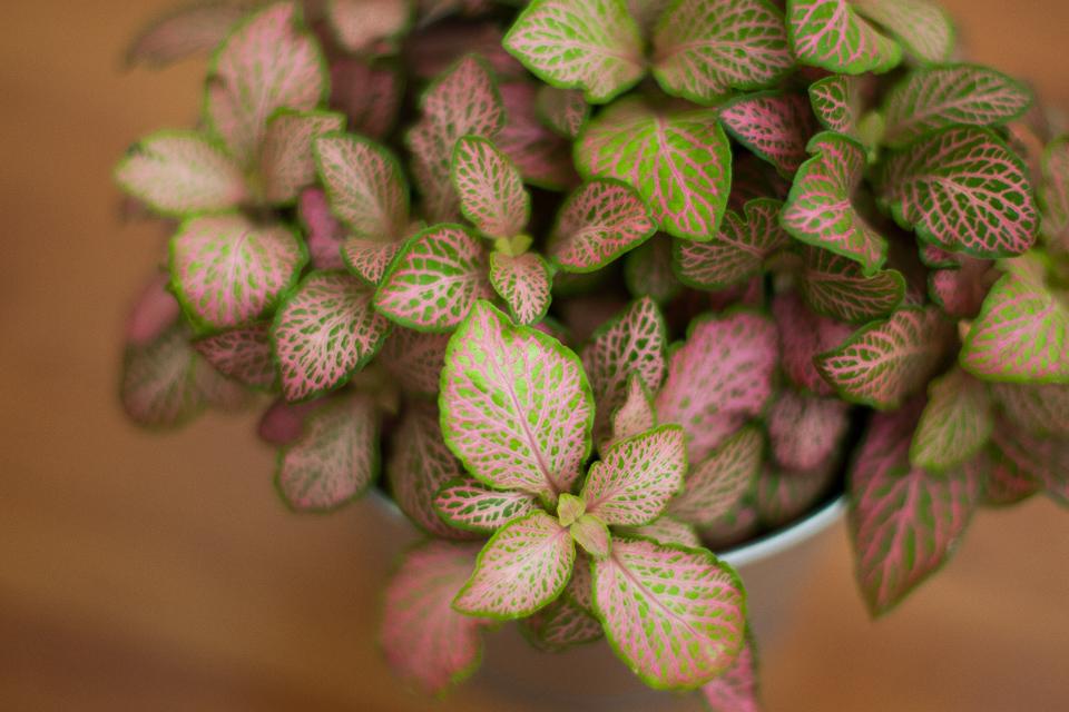 macro fleurs canon eos m5