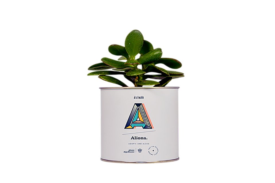 plante aloes depolluante diaiwaie