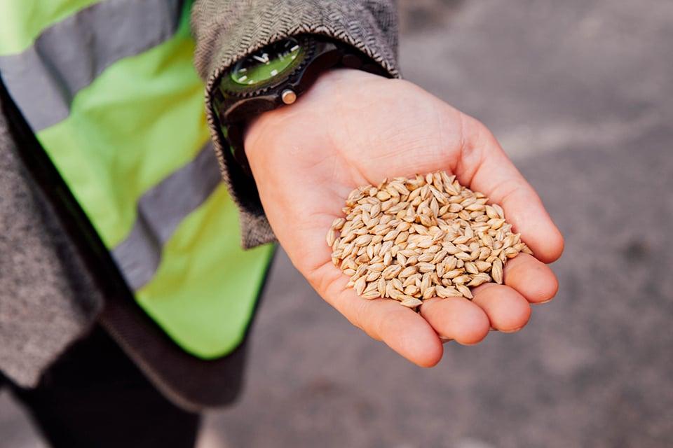 Glenfiddich Graines