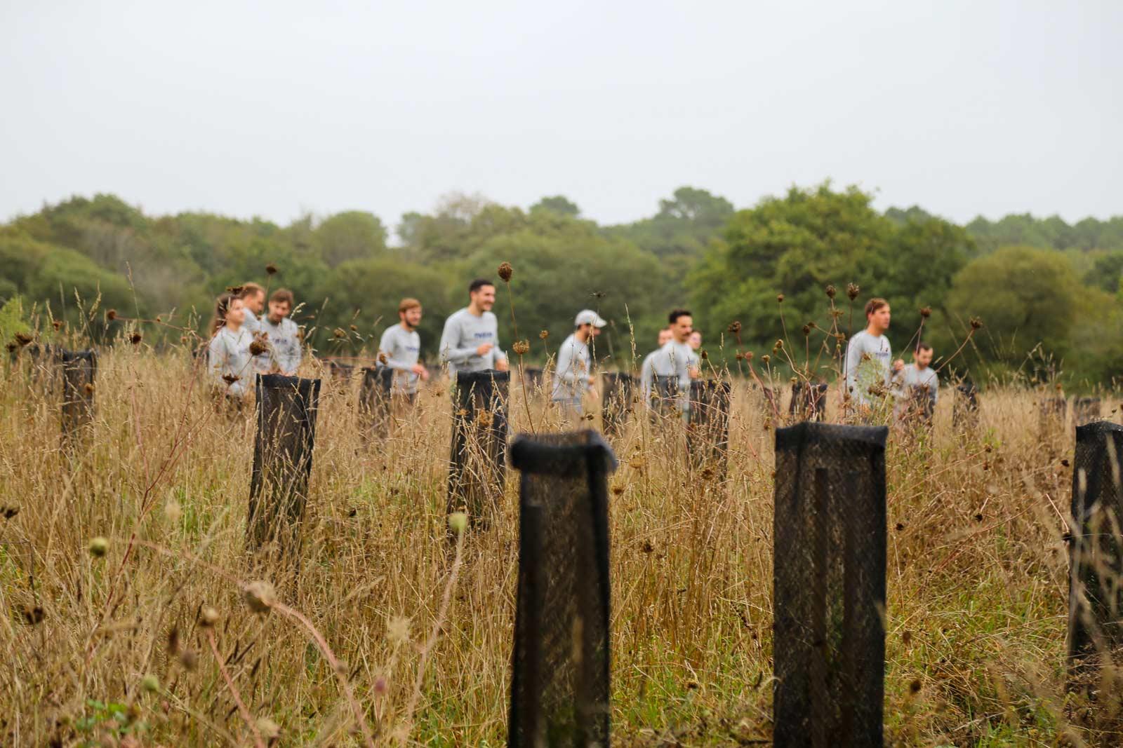 Plantation Arbres Environnement