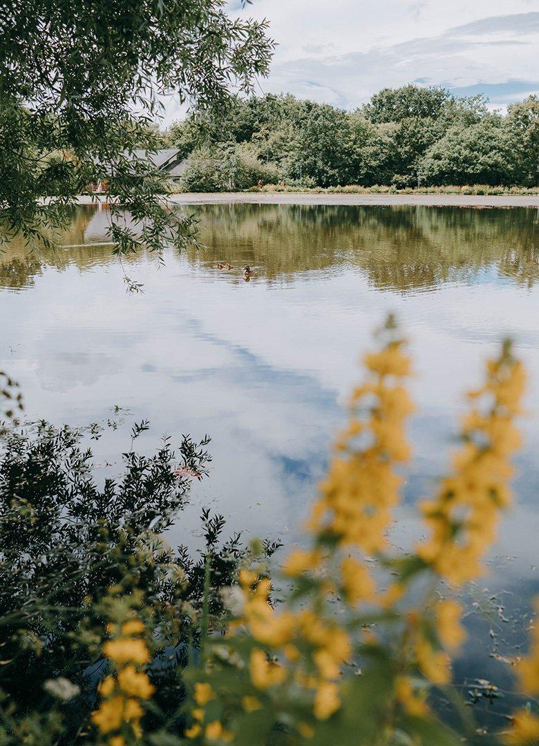 Parc des gayeulles canards