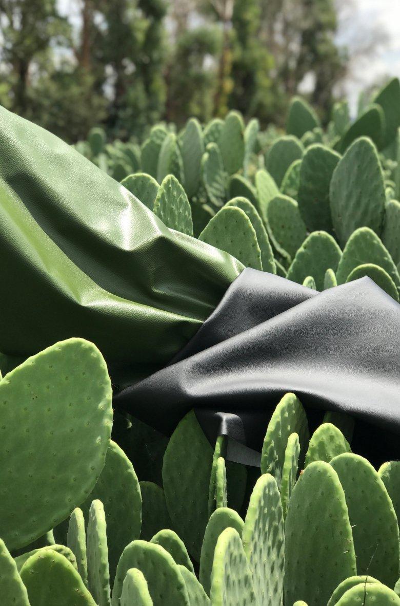 desserto cactus