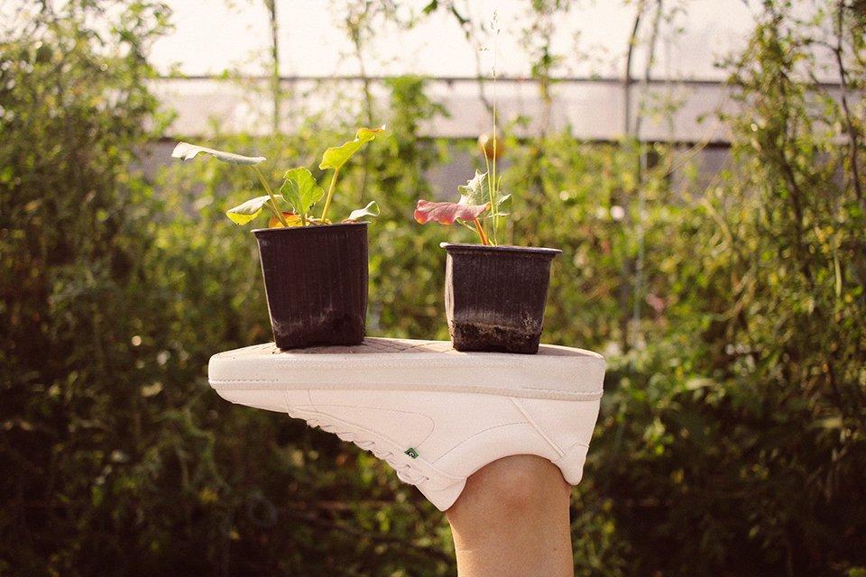 supergreen baskets fleurs